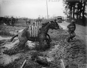 Near Ypres 1st August 1917 carrying shells a horse is dragged out of the mud. To the left a Decauville railway and in the foreground the remains of a standard gauge line.